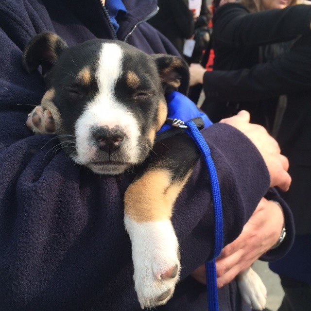 Battersea Dogs And Cats Home Fundraising
