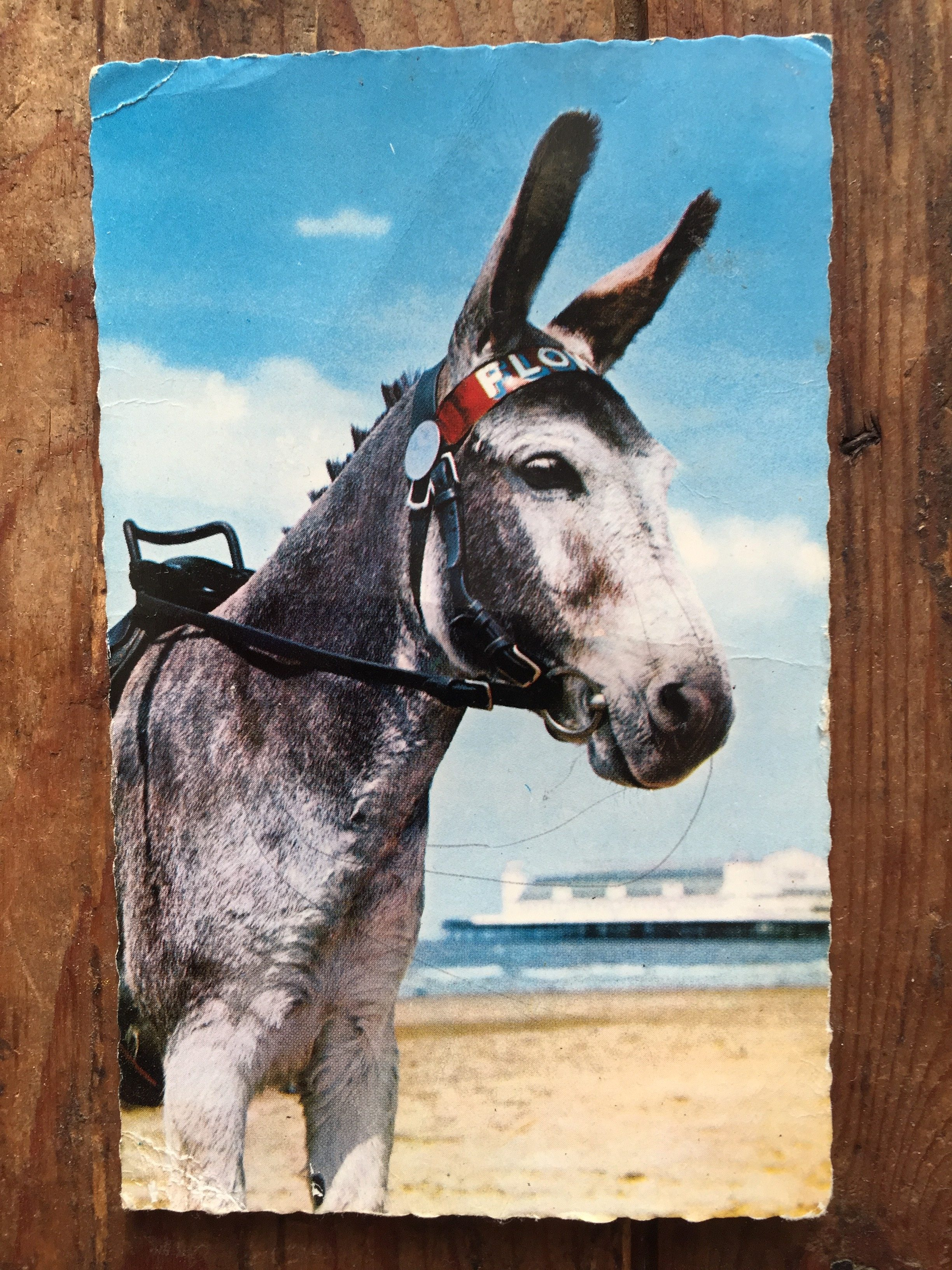 When I was a child, my grandma took me to see the donkeys at Weston-super-Mare. Now I write fundraising copy for The Brooke, the worldwide animal charity.