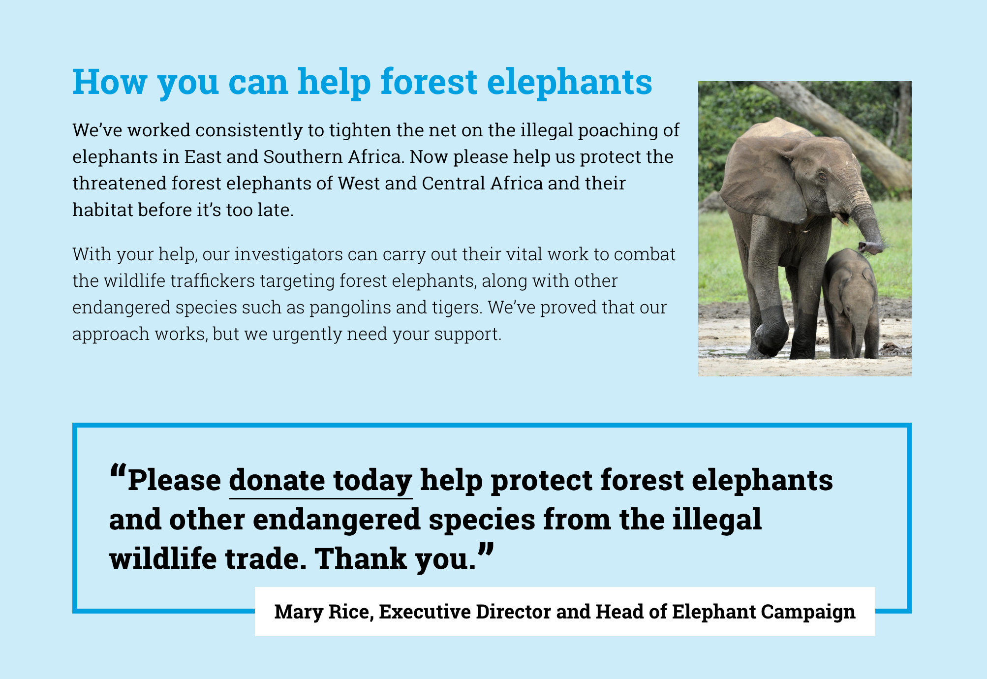 Web content about the forest elephant campaign by the Environmental Investigation Agency