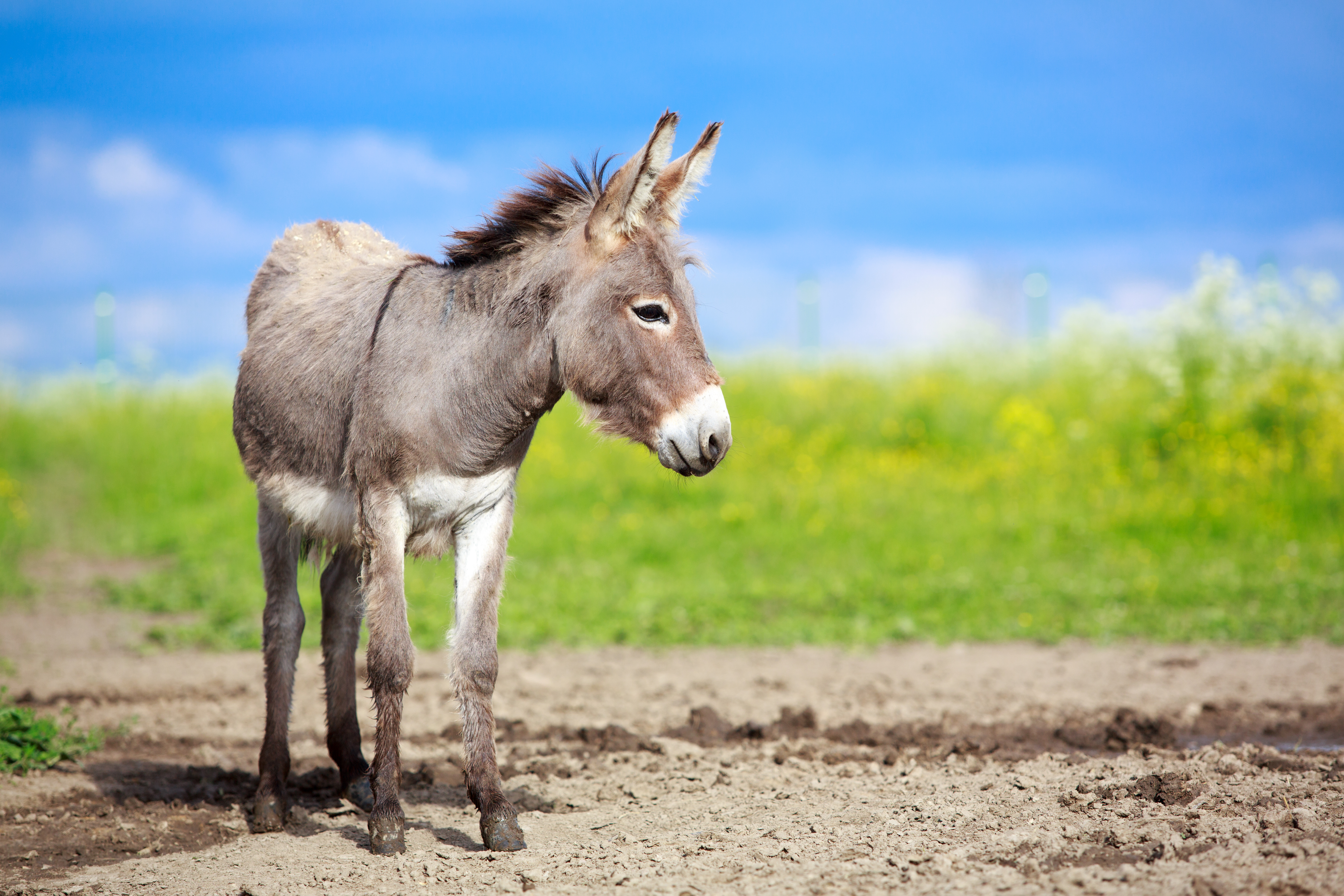 Picture of a donkey in a field. Copywriter Fiona Thompson writes fundraising materials for charities including the Brooke, the animal welfare charity